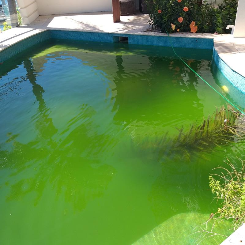 Who to clean a Green pool Gold Coast