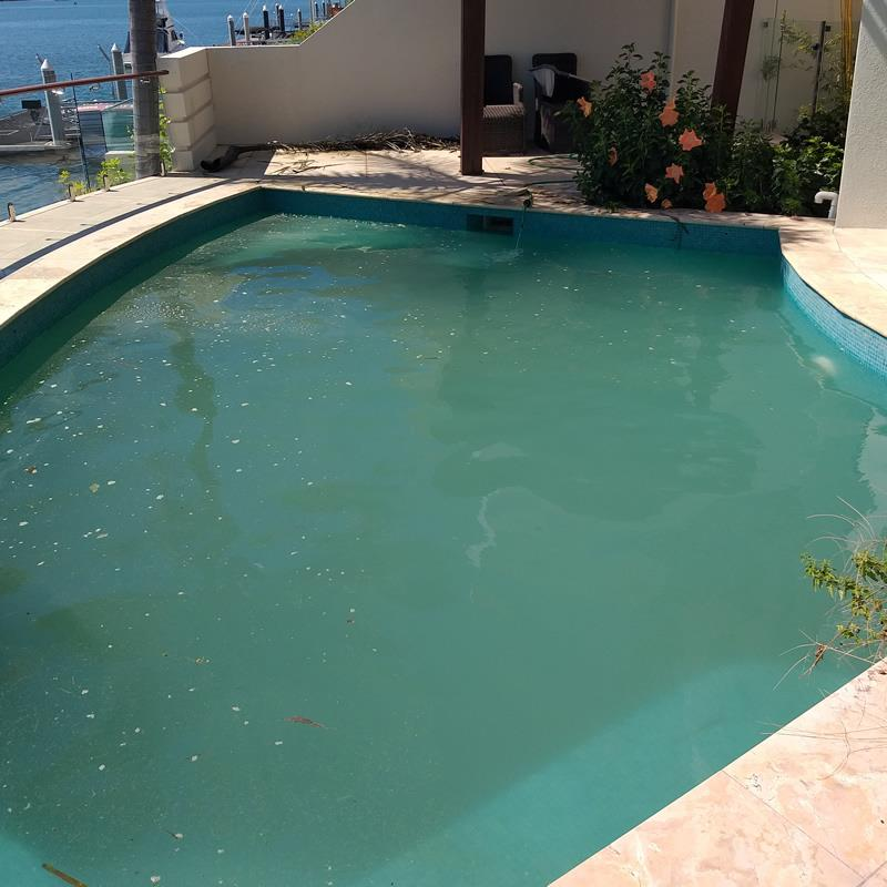 Green Pool cleaning Gold Coast