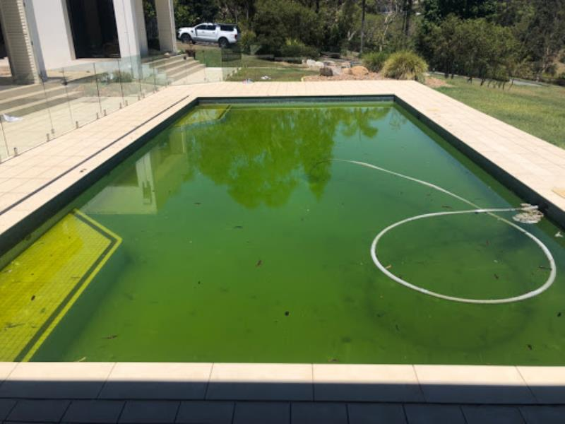 Green pool clean ups