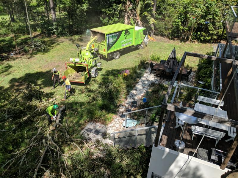 Tree services Nerang