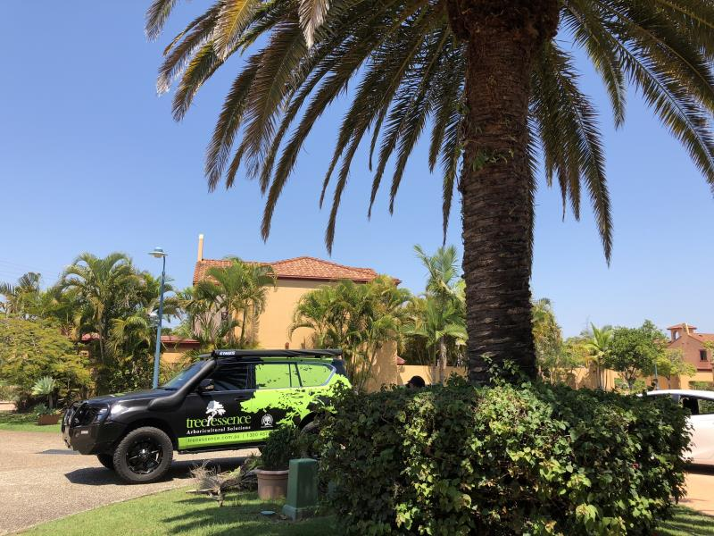Palm Cleaning - Robina