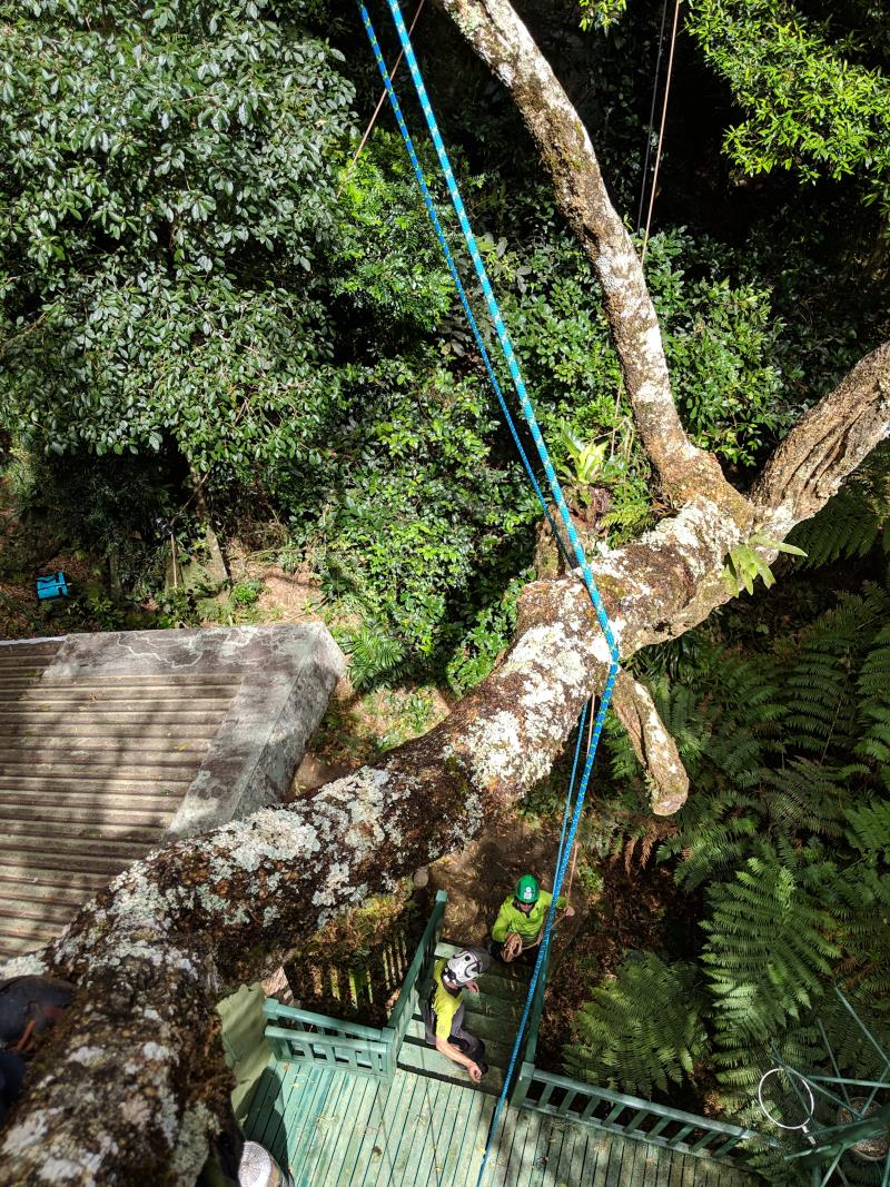Tree removal Nerang