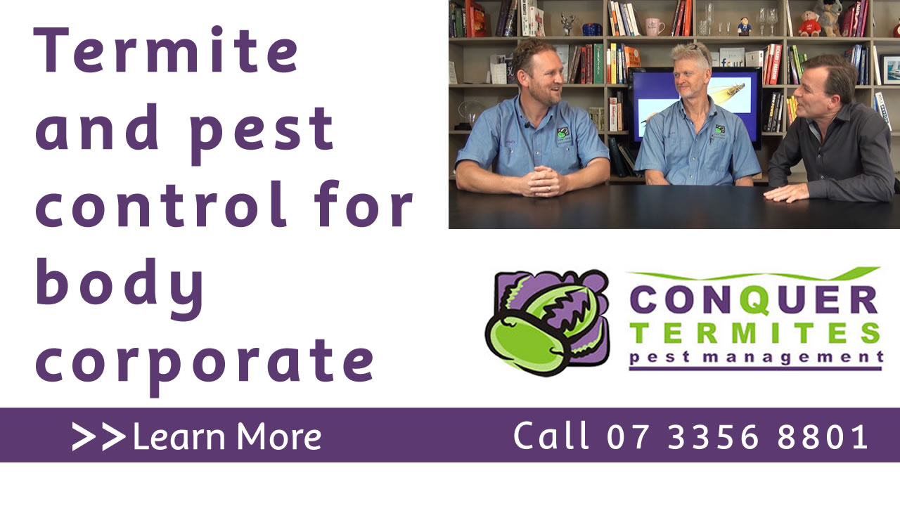 Termite and pest control for body corporate. Conquer Termites North side