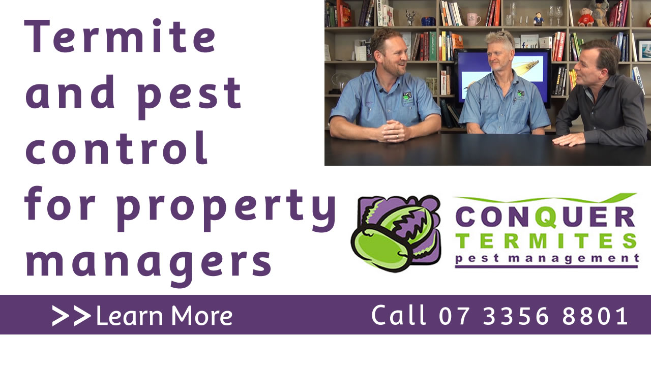 Termite and pest control for property managers. Conquer Termites Northside