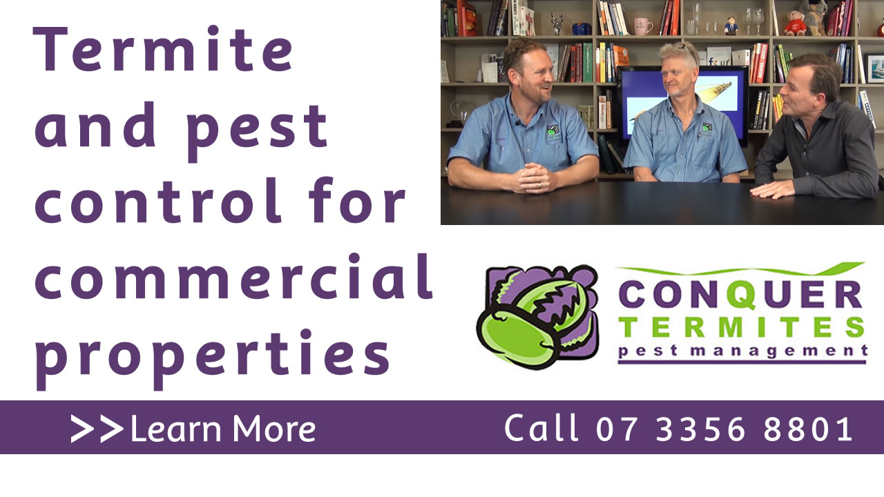 Termites and pest control for commercial properties. Conquer Termites Northside