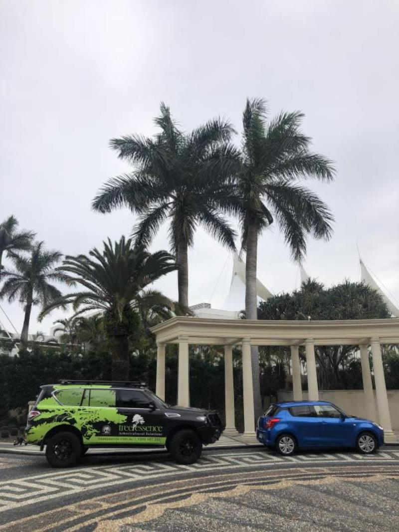 Palm Beach Palm Tree cleaning