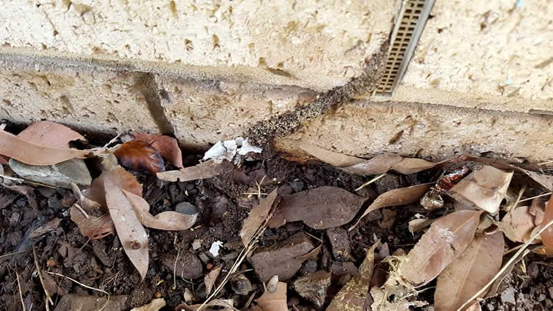 5 places to check around the house for Termites.