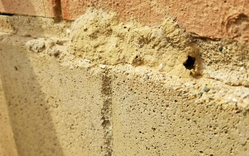 4 Things To Consider Before Your Next Termite Inspection