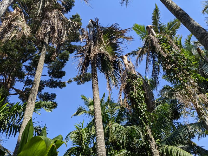 Palm tree removal - Byron Bay