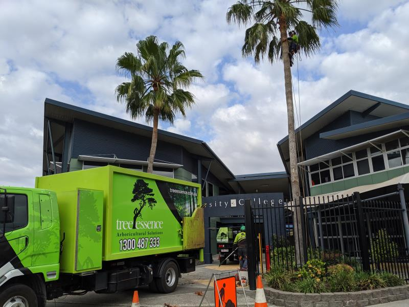Variety lakes College - Palm Cleaning