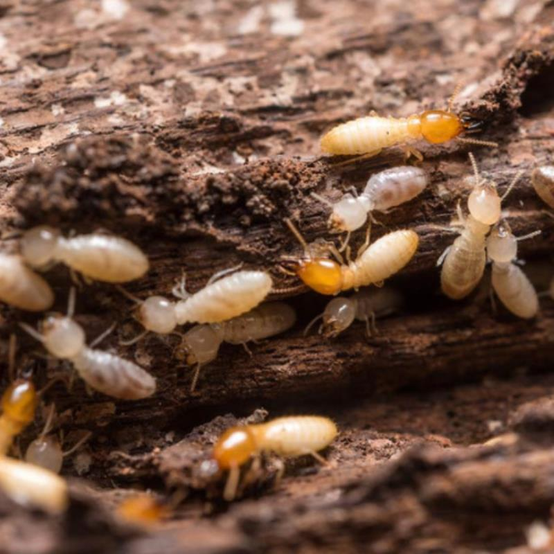 Backyard tips to eliminate termite headaches!