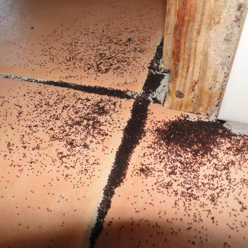 Termites: a threat to your home's foundation in Upper Caboolture