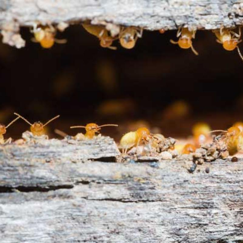 How to protect your home from termites during winter in Griffin?