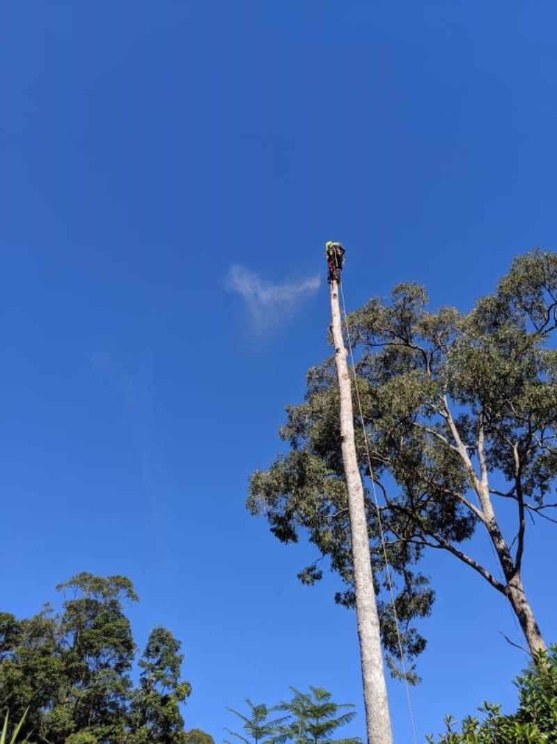 Tree Removal Coomera Gold Coast