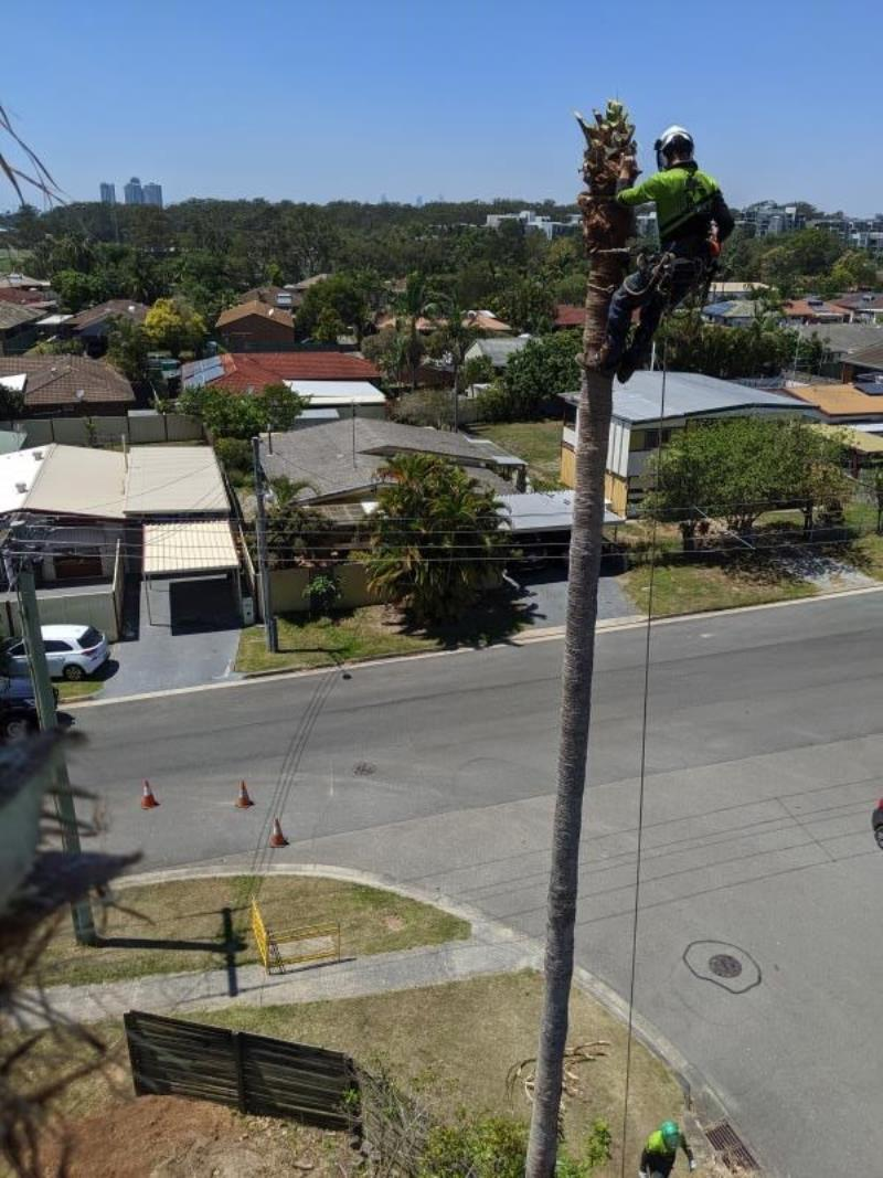 Palm Tree Removal Currumbin Gold Coast