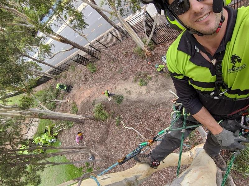 Tree Essence Tree Removal Helensvale