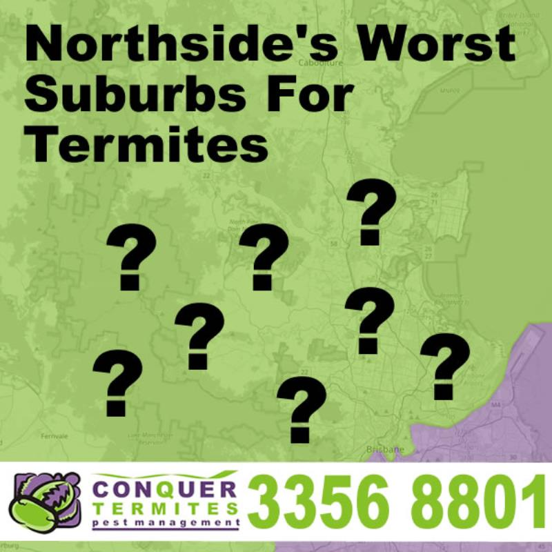 10 Brisbane Northside Suburbs Battling With Termites