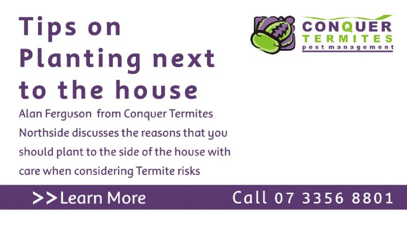 Tips for planting next to the house when considering Termite risk