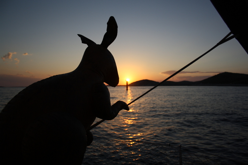Skippy in the sunset