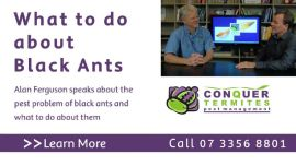 What do do about Black Ants with Alan Ferguson