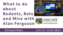 What to do about Rodents, Rats and Mice with Alan Ferguson