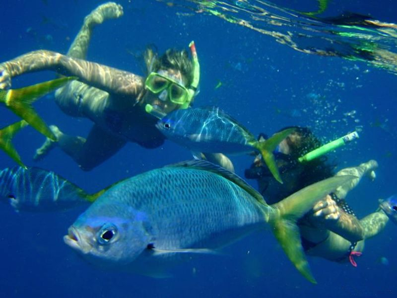Snorkeling with Fish | Fusiliers - Yellow Tail